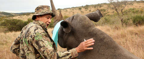 Volunteer with rhinos in South Africa